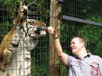 Feed The Big Cats By Hand - Weekday