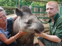 Tickle a Tapir Experience for Two
