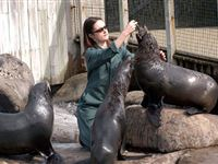 Zookeeper for a Day at Bristol Zoo with Entry for Two Lunch and Souvenir