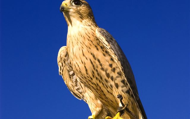 Half Day Introduction to Falconry Amazing Experience 1