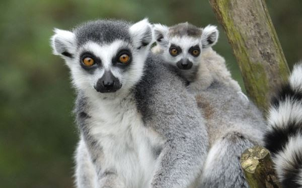 Meet The Animals at Bristol Zoo including Entry for Two and Free Drink Amazing Experience 3