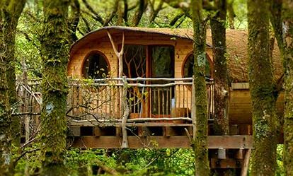 Two Night Tree House Escape for Two Amazing Experience 1