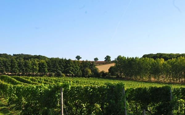 Vineyard Tour and Tasting with Lunch or Afternoon Tea for Two Special Offer Amazing Experience 1