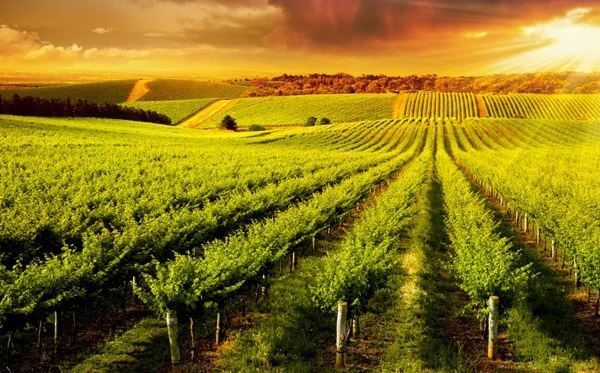 Vineyard Tour and Tasting with Lunch or Afternoon Tea for Two Special Offer Amazing Experience 2