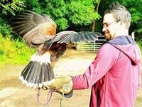 Bird Handling at Riverside Falconry