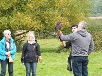 Half Day Falconry Experience at The Falconry School