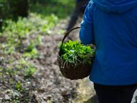 Wild Food Foraging and Cookery Course